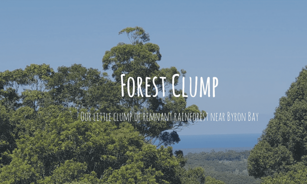 Forest Clump
